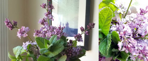 Lilac mint collage